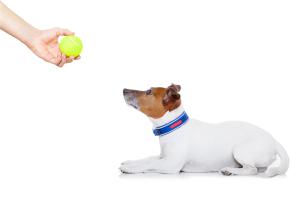 terapia behawioralna psów