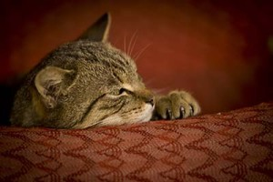 terapia-behawioralna-kotow